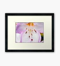 Rhododendron Blossom Too Framed Print