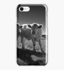 Curious Charolais iPhone Case/Skin