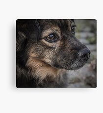 Tabitha the Shepherd Canvas Print