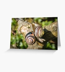 Two Grove Small Striped Snail / Snails Greeting Card