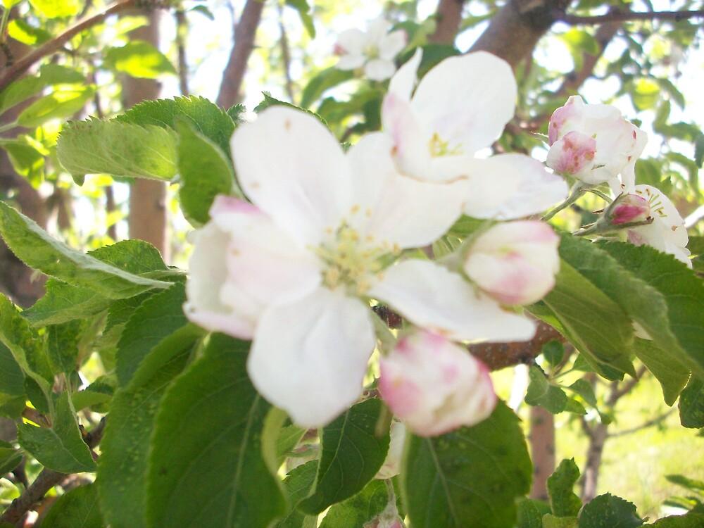 flowers again! by Jessica Leavitt