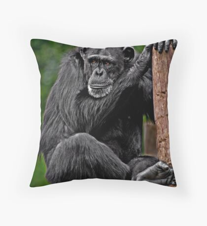 Chillin' Chimpanzee Throw Pillow