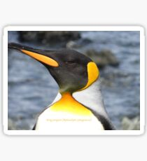 King penguin (Aptenodytes patagonicus) Sticker
