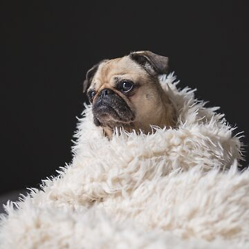 Peggie the Pug iii by dogobsession