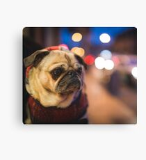 Peggie the Pug iv Canvas Print