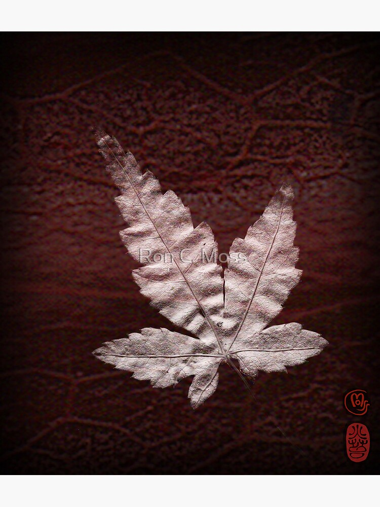 Maple Blood by ronmoss