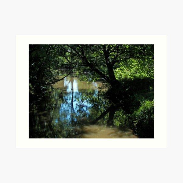 Creek woods Art Print