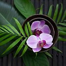 Zen Style Pink Orchid And Palm Leaf by artsandsoul