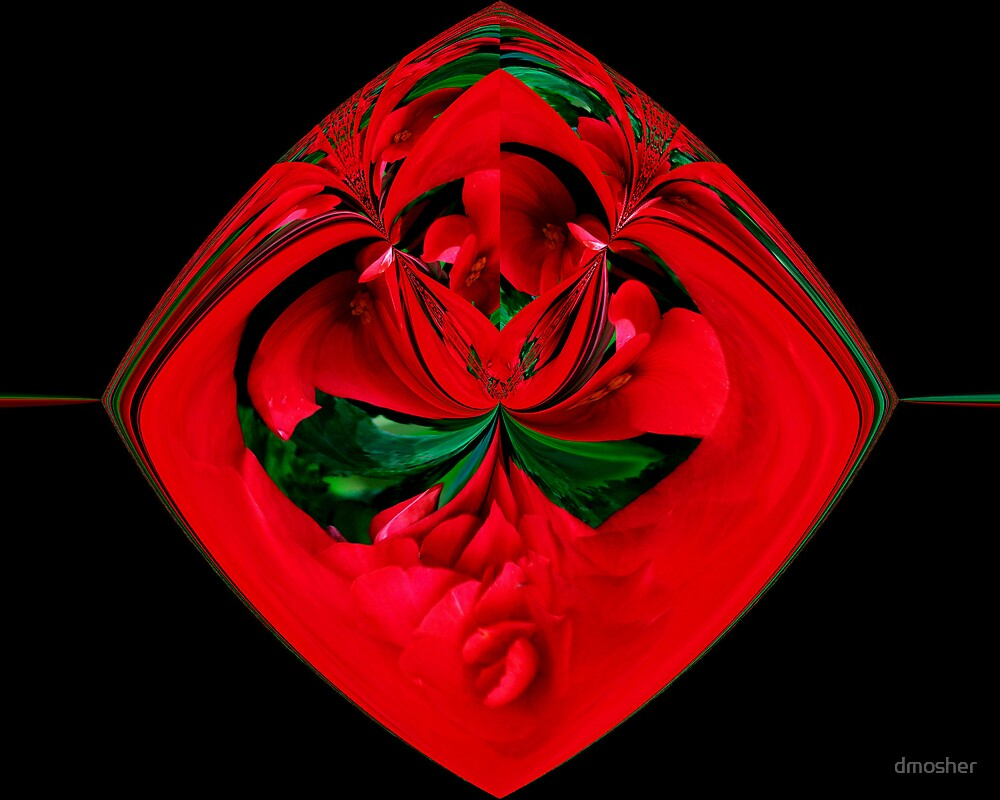 Red Rose by dmosher
