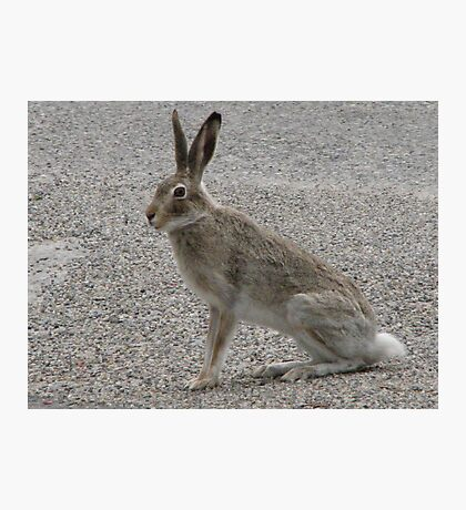 JackRabbit #2 Photographic Print