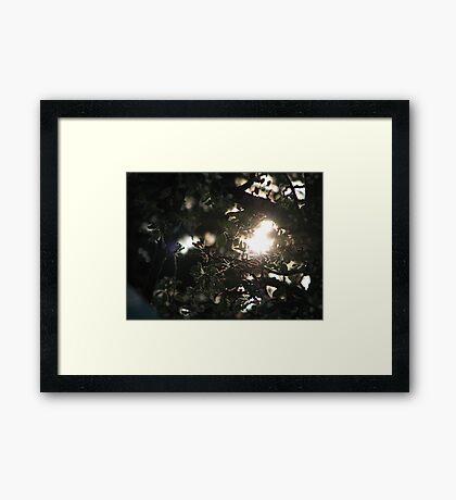 AppleBlossoms and the Setting Sun Framed Print