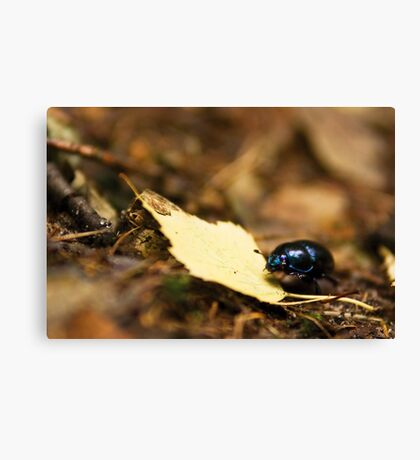 Beetle and his journey Canvas Print