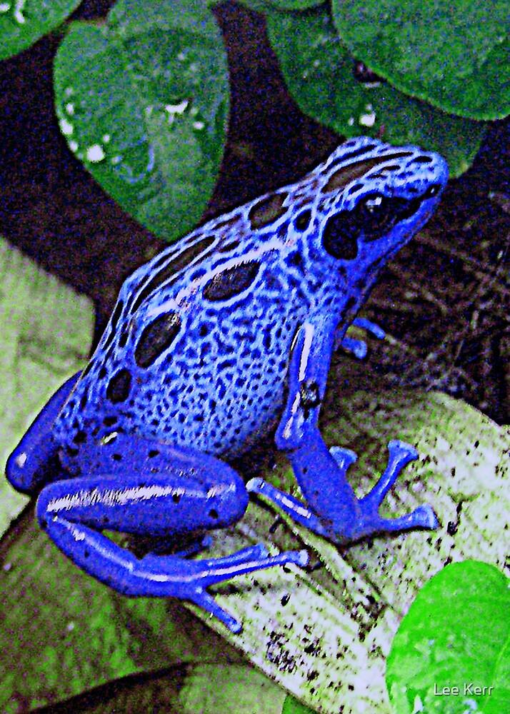 Blue Frog by Lee Kerr