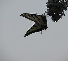 Butterfly against the sky by gypsykatz