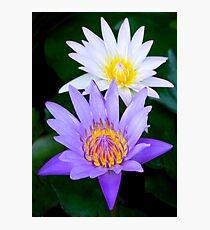Lotus Flowers Photographic Print