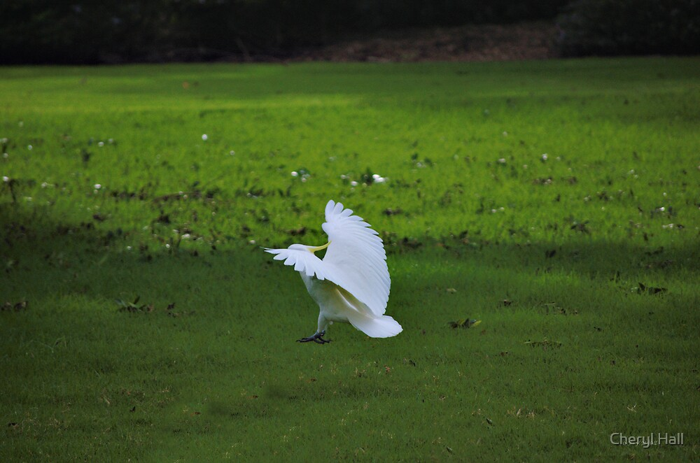 COMING IN FOR LANDING by Cheryl Hall