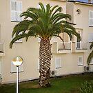The Palm Tree by JEZ22