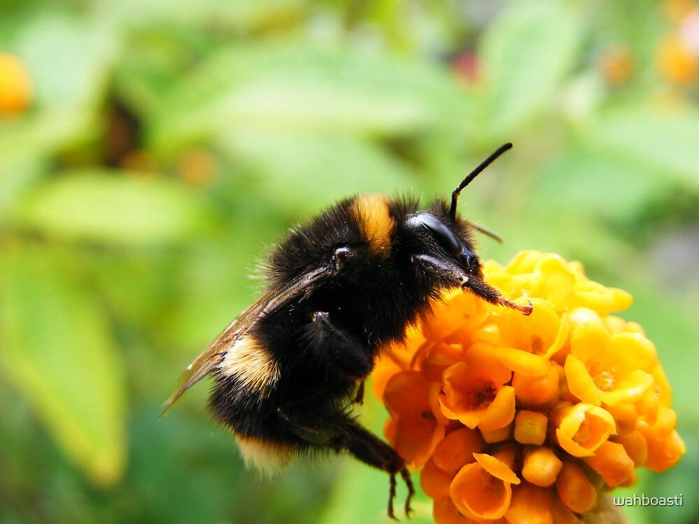 Buddliah Bee by wahboasti