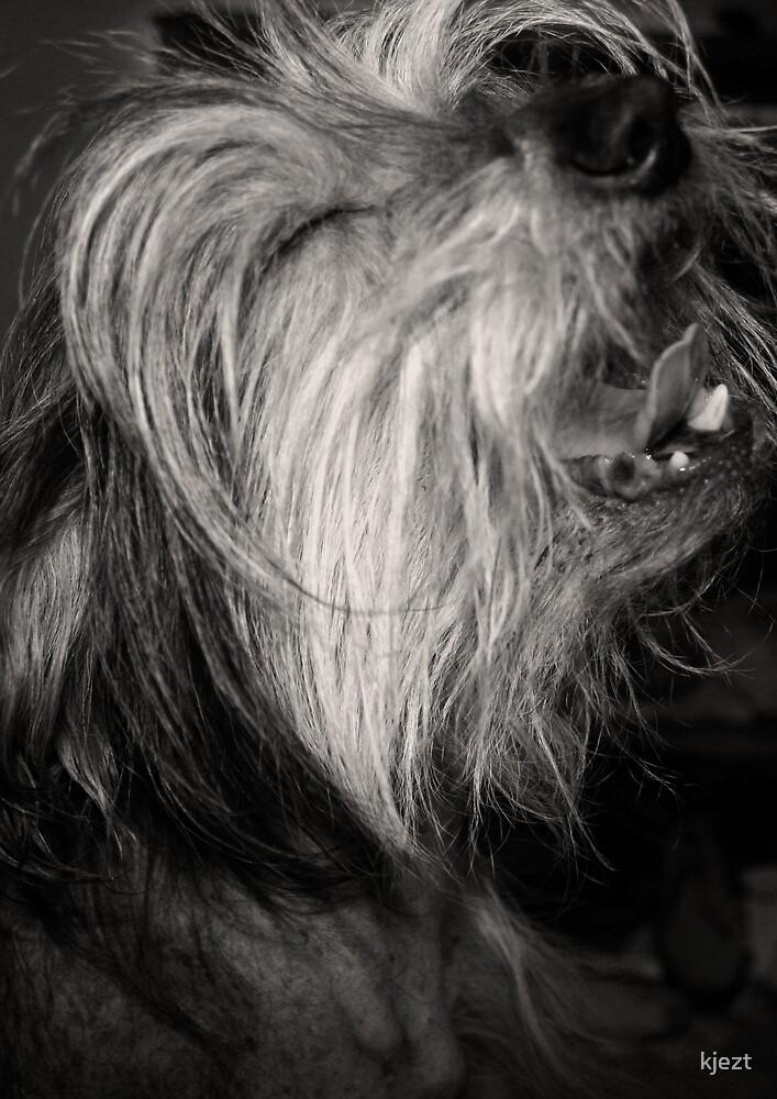 The Singing Dog by kjezt