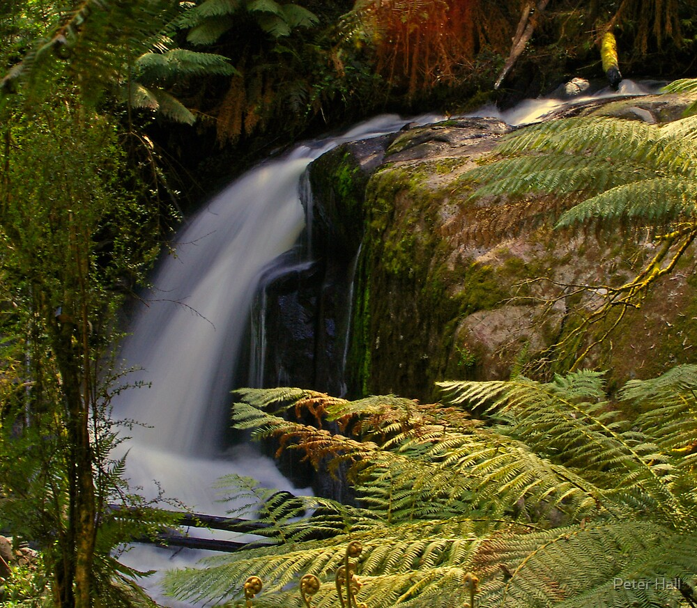 Noojee Falls, East Gippsland Victoria by Peter Hall