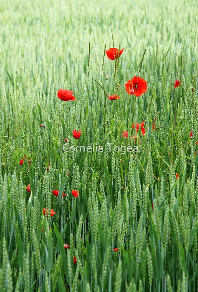peaceful field by Cornelia Togea