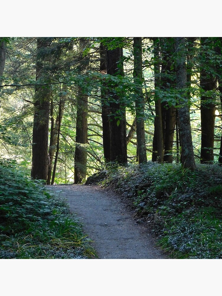 Enfield Glen Path by markreep