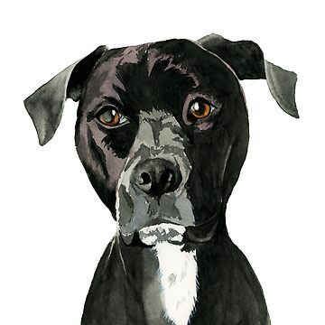 Contemplating | Black Pit Bull Dog Illustration by namibear