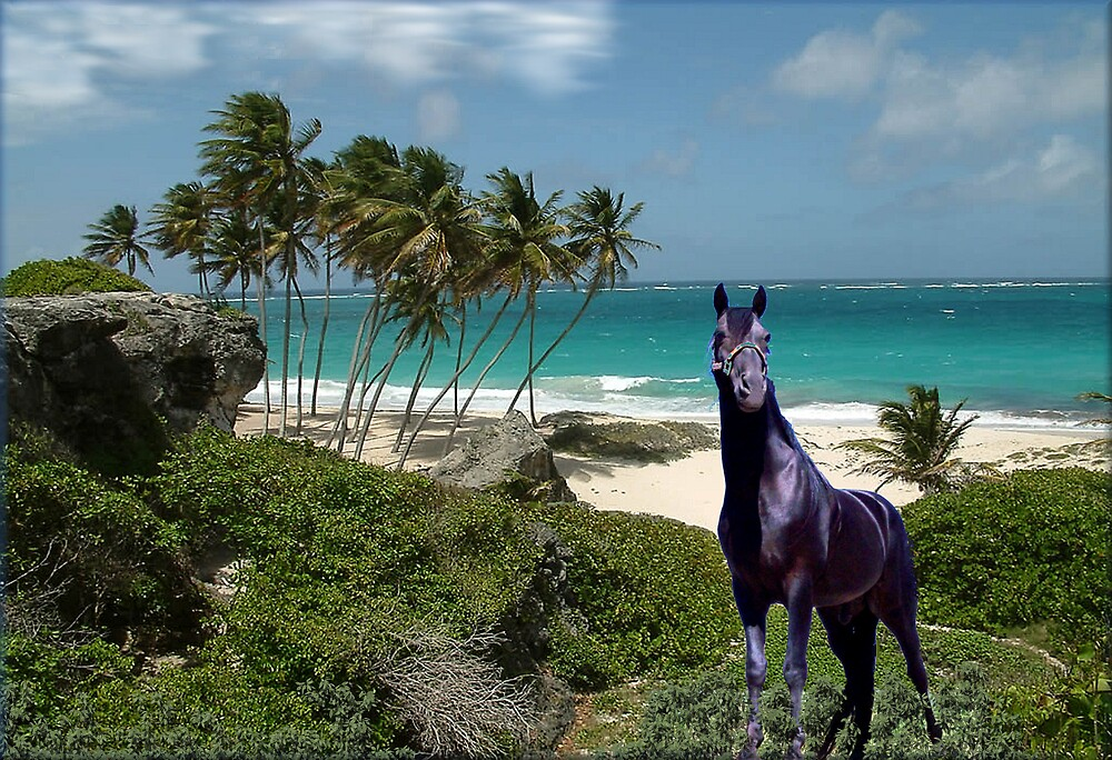 909-Tropical Stallion by George W Banks