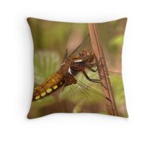 Female Broad-bodied Chaser Throw Pillow