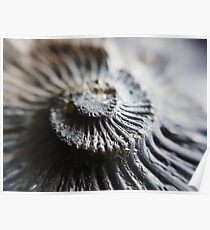 Ammonite Tower // Nature // Fossil // Photography Poster