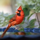 Cardinal on Bird Bath in Late Summer by Bonnie T.  Barry