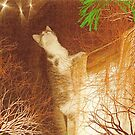 Go Cat by DeenieM