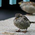 Little Finch by Jason Dymock Photography