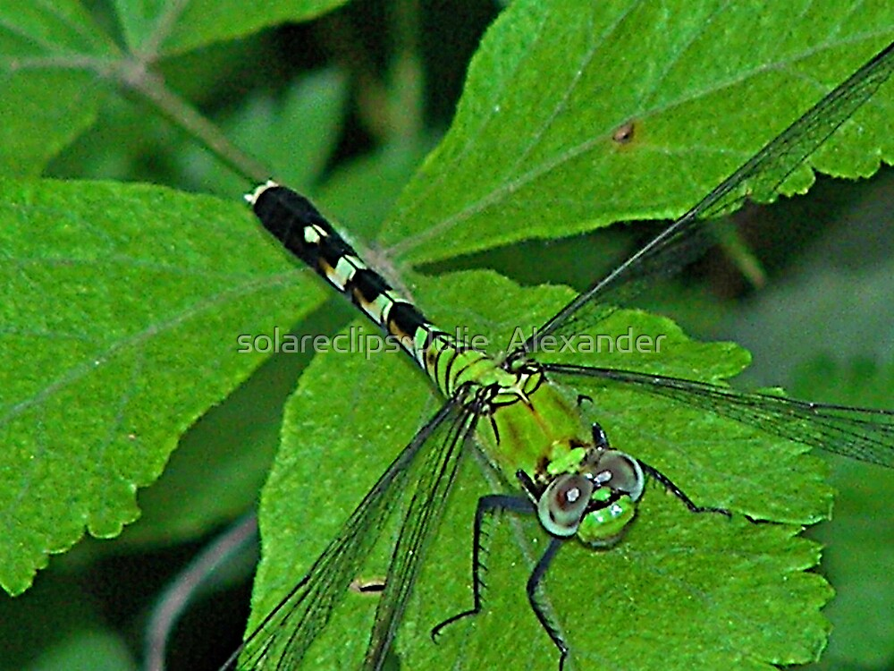 Dragon Fly part one by solareclips~Julie  Alexander