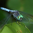 Dragon Fly part two by solareclips~Julie  Alexander