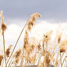 Dancing In The Wind by lemontree