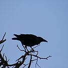 The Raven On Its Branch by lemontree