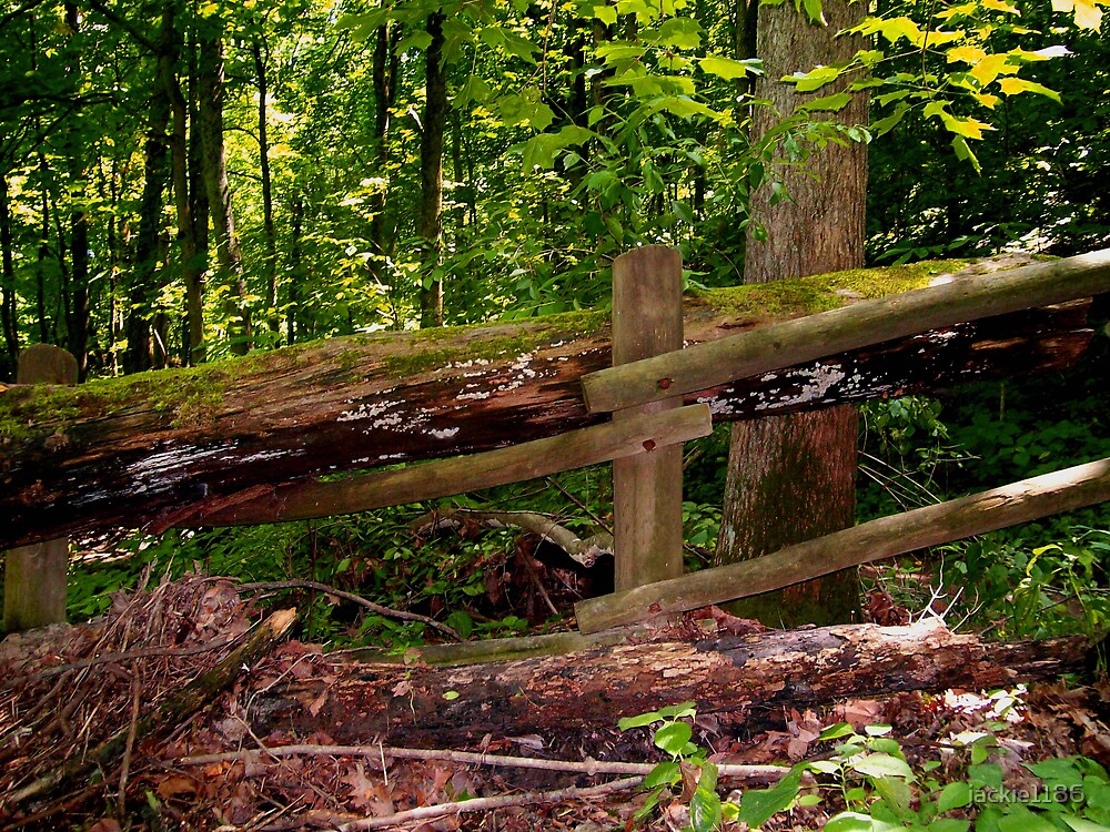 nature builds its own fences by jackie1186