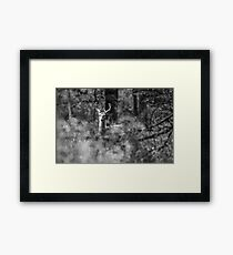 White-tailed Deer 2017-1 Framed Print