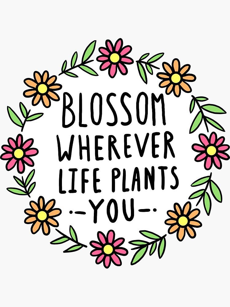 Blossom Wherever Life te planta de hellobubblegum