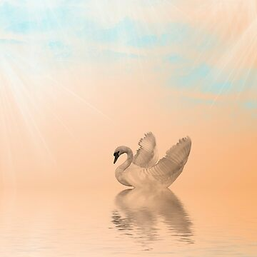 Swan Swim by wildshots
