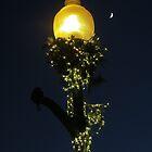 Lamplight & Moonlight by Sandra Fortier
