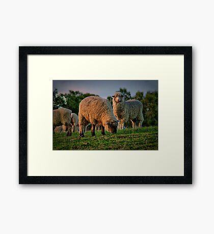 """""""The Call of the Shepherd"""" Framed Print"""