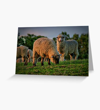 """""""The Call of the Shepherd"""" Greeting Card"""