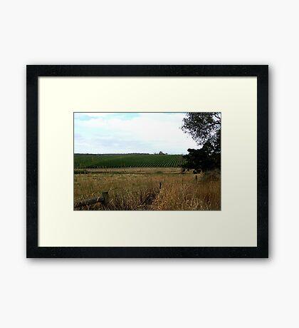 Peninsula Vineyards,Mornington Peninsula,Victoria, Framed Print