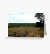 Peninsula Vineyards,Mornington Peninsula,Victoria, Greeting Card