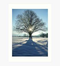 coronation tree Art Print