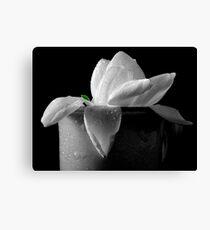 Gardenia in coffee cup Canvas Print