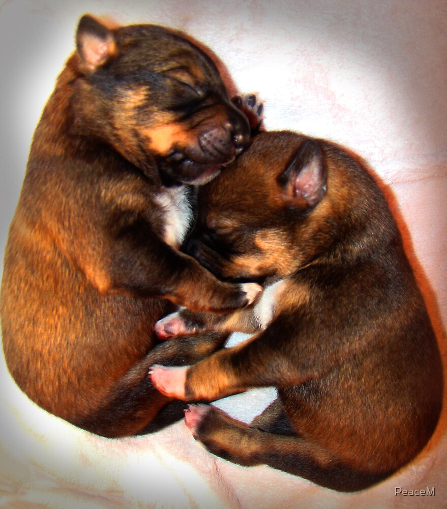 2 puppies by PeaceM
