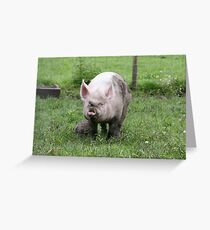 A Pig And Its Ball Greeting Card